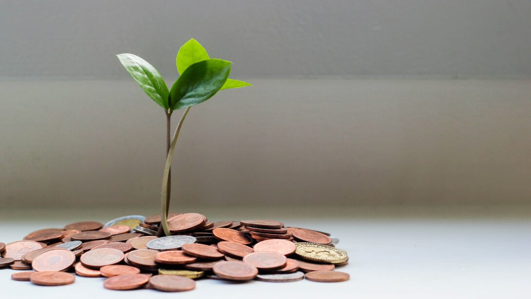 Plant Seedling Growing out of a pile of pennies